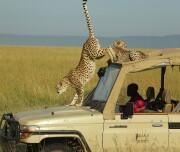 mara-ngenche-safari-camp-290922-original