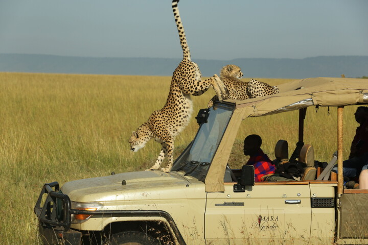 mara-ngenche-safari-camp-290922-original