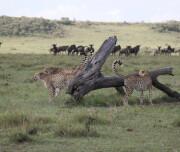 mara-ngenche-safari-camp-290924-original
